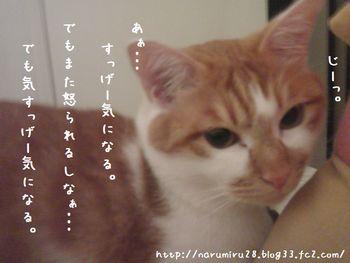 20101016h.jpg