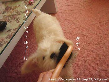20101017g.jpg