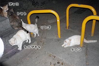 2011-11-06-2.jpg