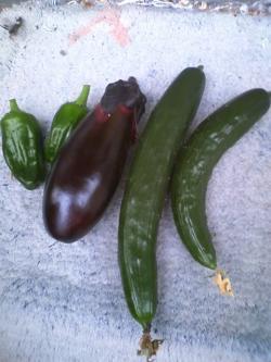6-6収穫