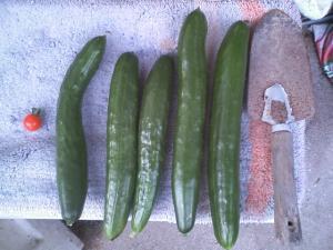 6-22収穫