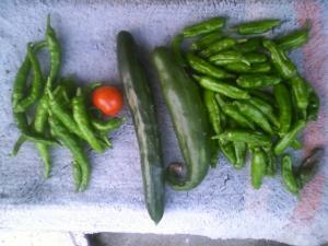 7-8収穫