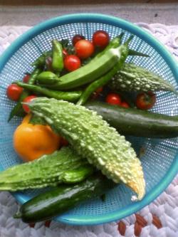 8-2収穫