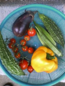 8-8収穫