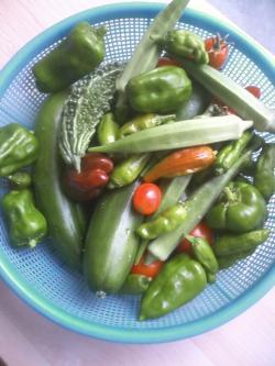 8-18収穫