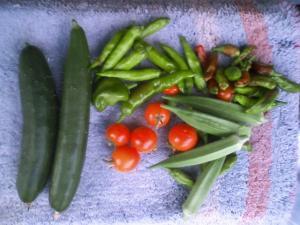 8-21収穫