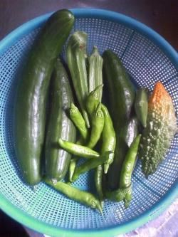 8-31収穫