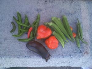 9-26収穫