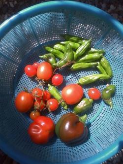 9-30収穫