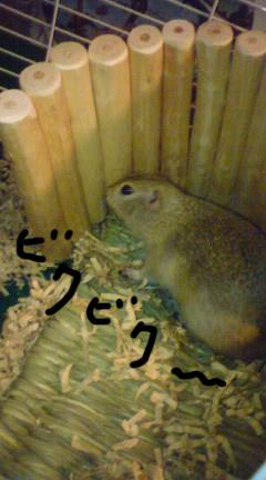 PA0_0000_20110122190334.jpg