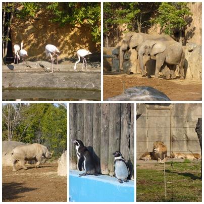 仙台 八木山動物園