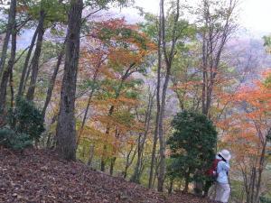 辺室山の紅葉 クリックで拡大