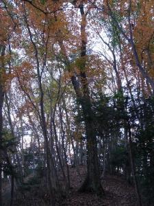 春の木丸山頂 クリックで拡大