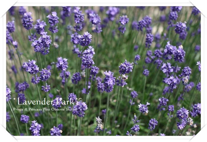 lavendar0024-20100728.jpg