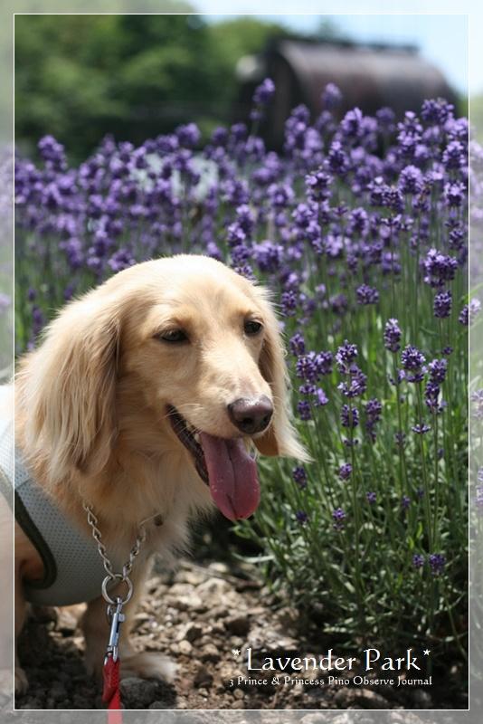 lavendar0029-20100728.jpg
