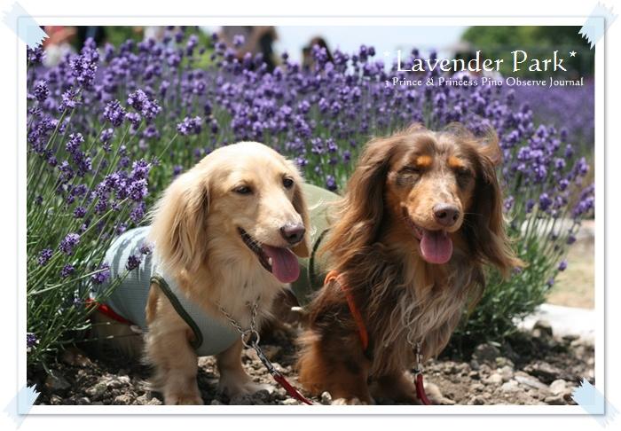 lavendar0035-20100728.jpg