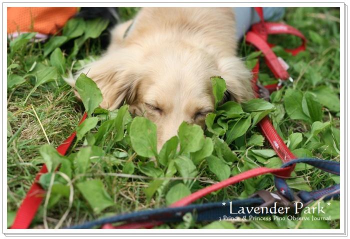 lavendar0055-20100728.jpg