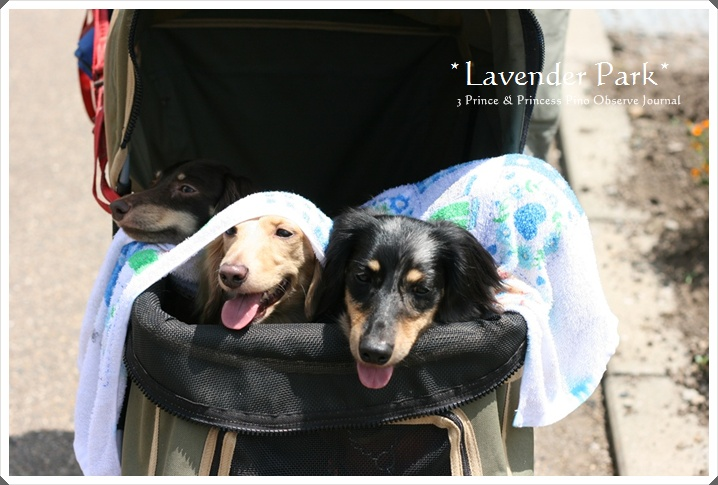 lavendar0088-20100728.jpg