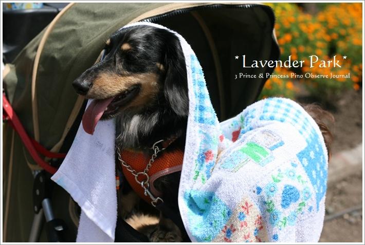 lavendar0090-20100728.jpg
