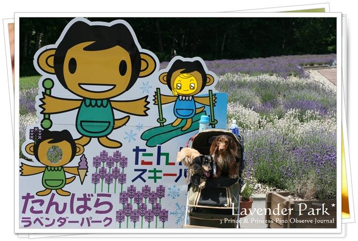 lavendar0093-20100728.jpg