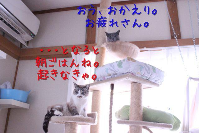 kako-hmzegm4fruJyBQXp.jpg