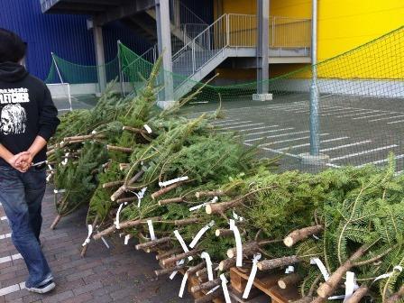 IKEAモミの木を買いに201316