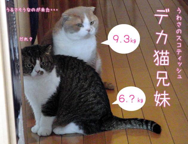20110401_02.jpg