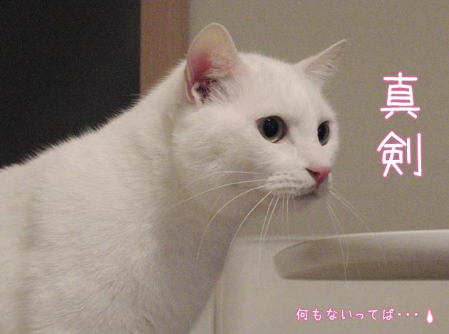 20110406_04.jpg