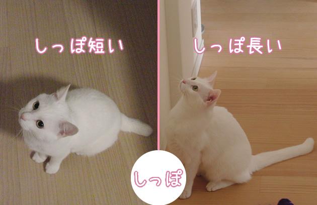 20110413_04.jpg