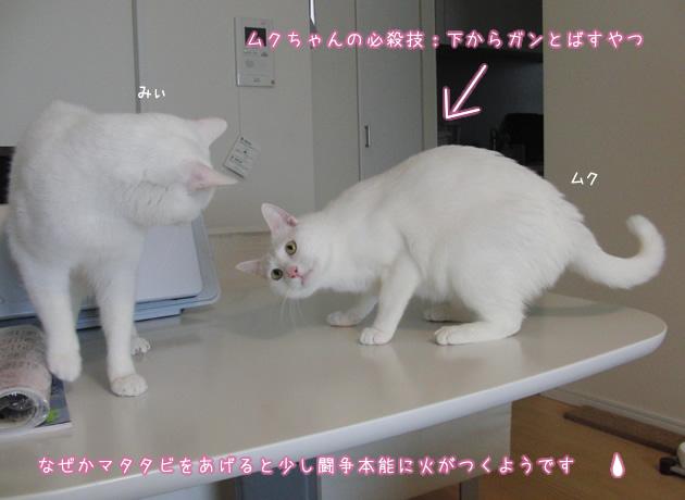 20110419_04.jpg