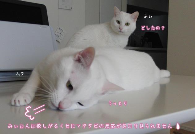 20110419_07.jpg