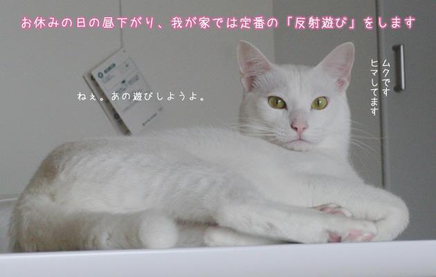 20110420_01.jpg