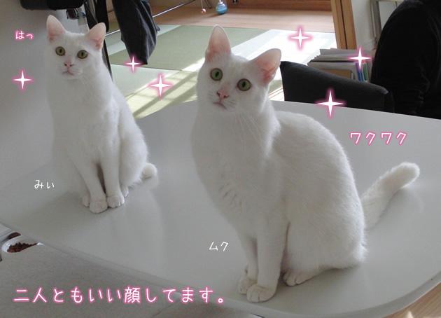20110420_04.jpg