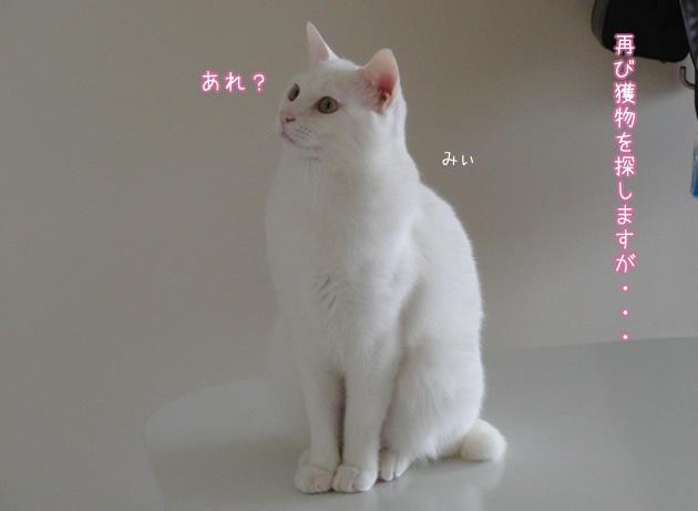 20110420_06.jpg