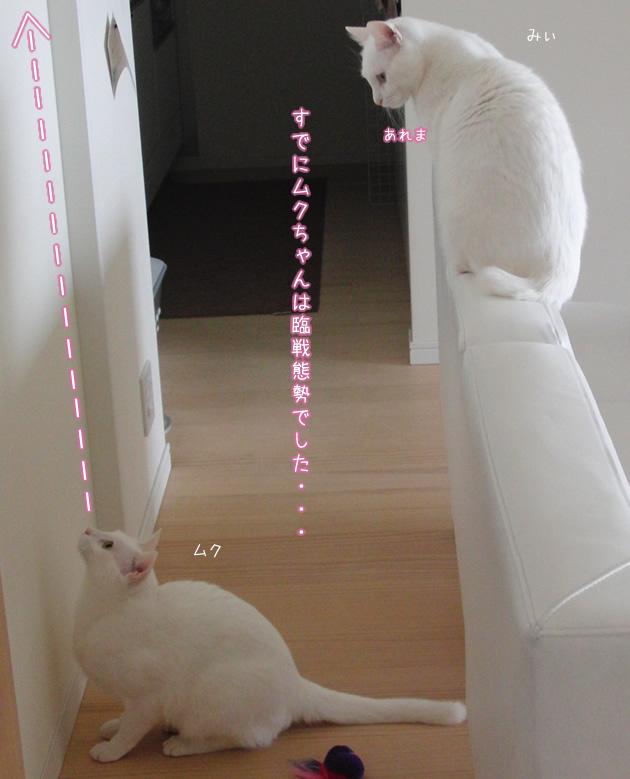 20110420_07.jpg