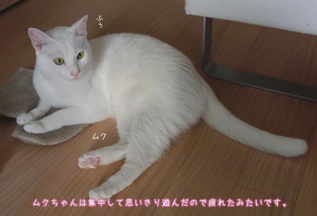 20110420_09.jpg
