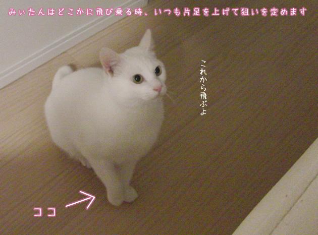 20110421_02.jpg