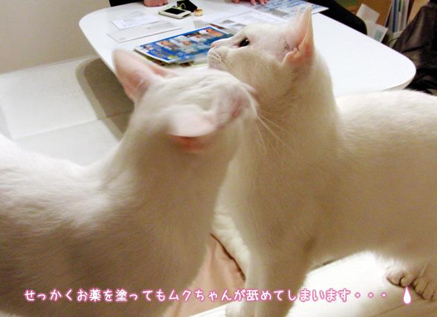 20110424_03.jpg