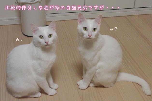 20110427_01.jpg