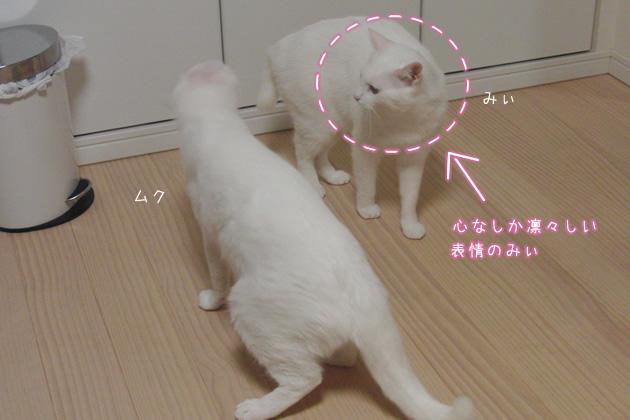 20110427_04.jpg