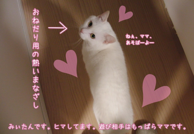 ズングリムックリ白猫みぃたん