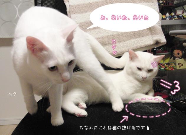 チェア占領中の白猫兄弟