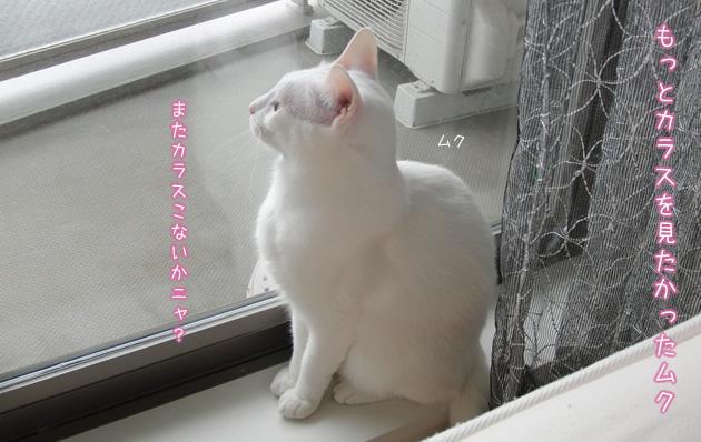 20110502_01.jpg