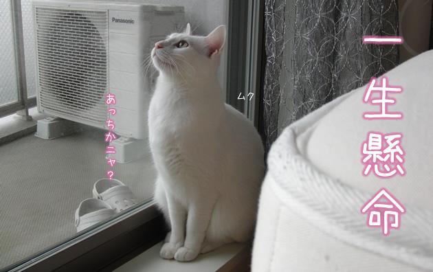 20110502_02.jpg