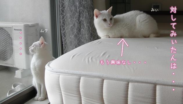 20110502_03.jpg