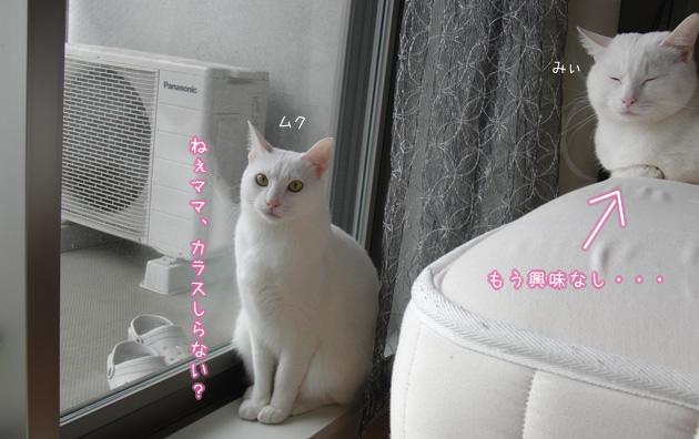 20110502_04.jpg