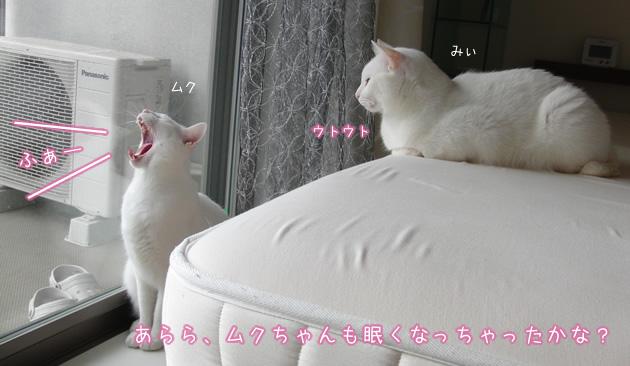 20110502_05.jpg