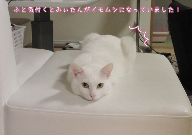20110504_01.jpg