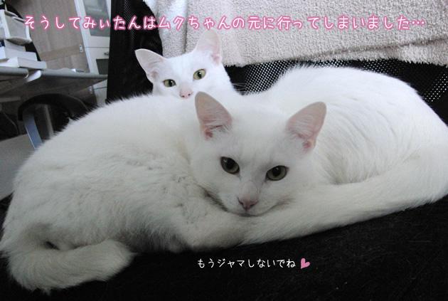 20110504_07.jpg