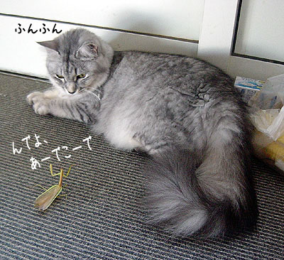 猫便り-チロル